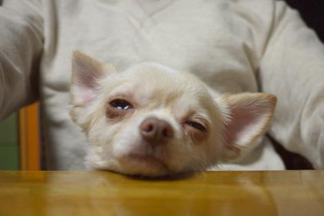 写真:眠そうな「ソラ」