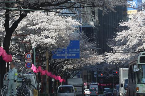 写真:中野サンプラザ付近の桜並木