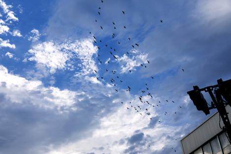 写真:夕方、鳥の群れが舞っていた。