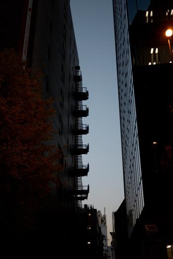 写真:夕暮れでシルエットになったビルのわきに紅葉した樹がある