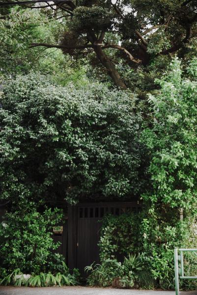 木に埋もれそうな家